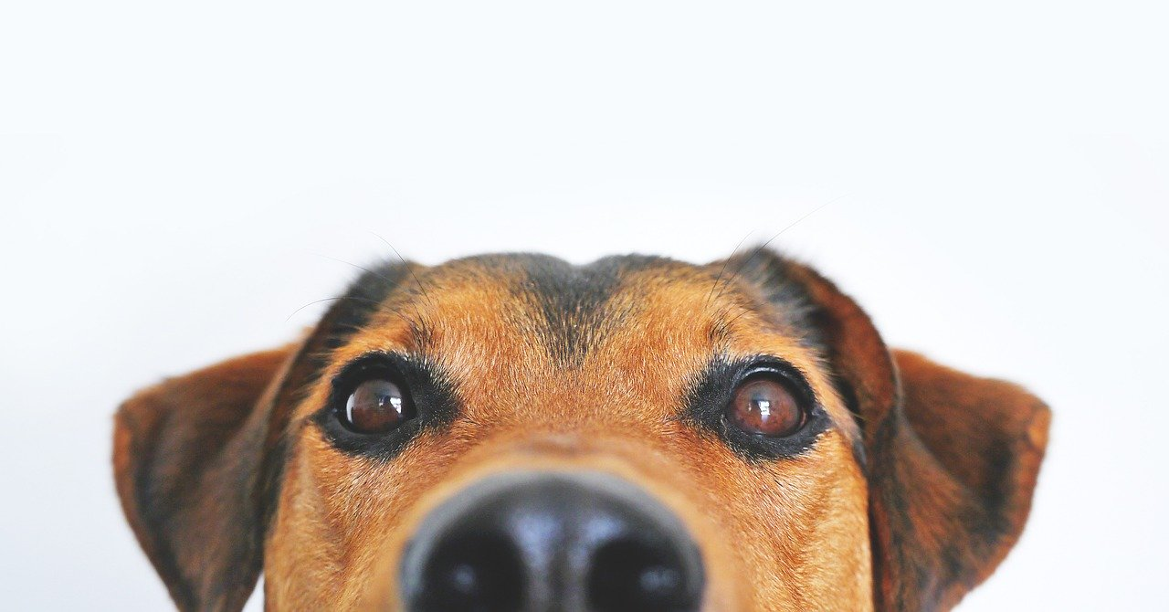 Penser à faire dresser son chien de compagnie.